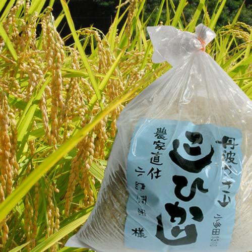 篠山コシヒカリ