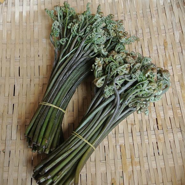 山菜 わらび