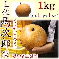 土佐馬次郎(うまじろう)梨・植田省三梨園・1kg(大玉1kg×1玉入)【産地直送】