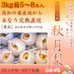 秋月梨(あきづきなし)秀品3kg・5〜7玉入り【産地直送】