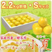 土佐小夏(高知県産)家庭用兼ご贈答用・小箱(約2.2kg)・Sサイズ