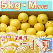 土佐小夏(高知県産)家庭用・大箱(約5kg)・Mサイズ