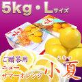 土佐小夏(高知県産)ご贈答用・大箱(約5kg)・Lサイズ