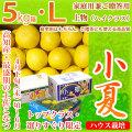 土佐小夏(ニューサマーオレンジ)・家庭用兼ご贈答用(上物・ハイクラス)・5kg・Lサイズ
