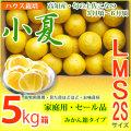 小夏・家庭用・セール品・大箱(5kg)・2S、S、M、Lサイズ・高知県産・ハウス栽培の土佐小夏