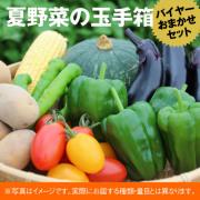 173-80142 四季舎ファーム 夏野菜の玉手箱