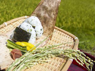 お米は日本人のソウルフード