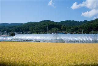 日本は農薬使用量世界一の国