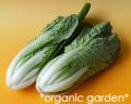 JAS有機 ベビー白菜 1〜2玉