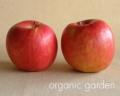 [三上さんの有機栽培りんご]JAS有機 りんご 2玉/ふじ