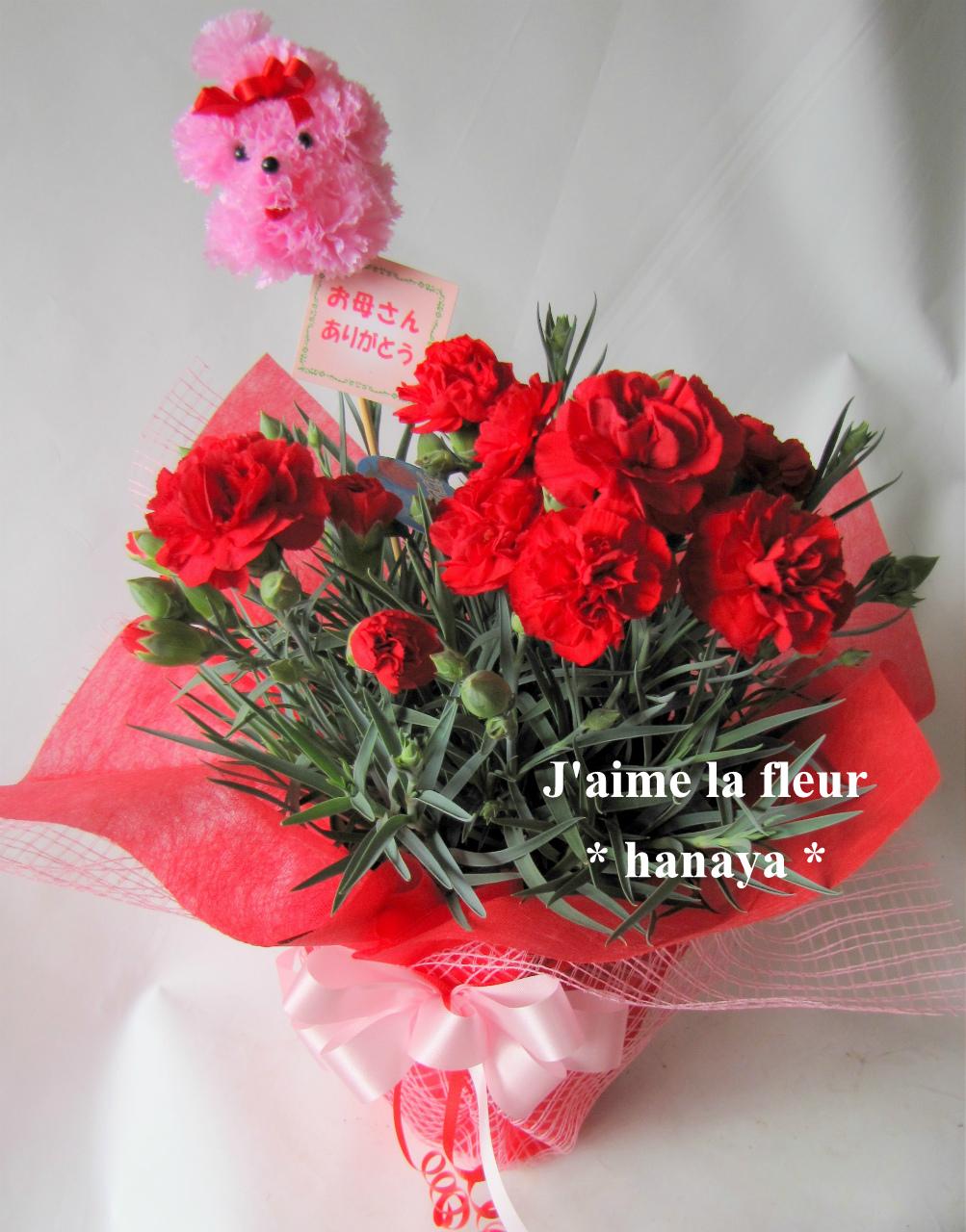 母の日カーネーション鉢花 赤