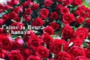 赤いバラ100本花束
