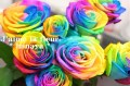 虹色バラ レインボーローズ
