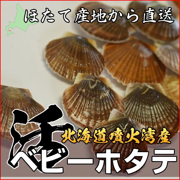 活ほたてベビー貝 5kg 北海道産!旬 2月15日より