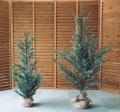 クリスマスツリー,ホーゲボーニング,Hogewoning,オランダ,ナチャラルデコレーション