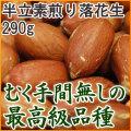 半立素煎り落花生(ローストピーナッツ) 【290g】  [千葉県産落花生]