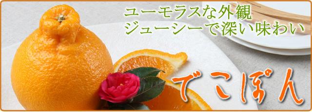 武田青果【Fruit Takeda】の甘い高知産デコポン