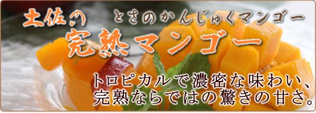 土佐完熟マンゴーの通販