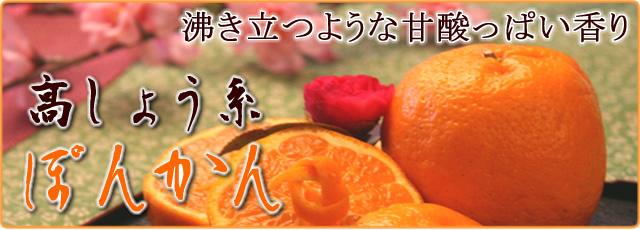 武田青果~Fruit Takeda~の立目ぽんかん通販