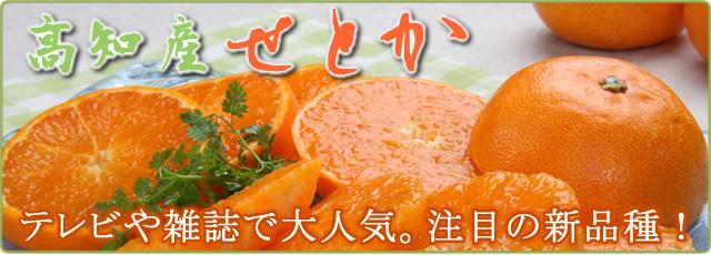 武田青果~Fruit Takeda~の甘い山北産せとか