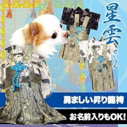 男振り袴(はかま)星雲(せいうん)
