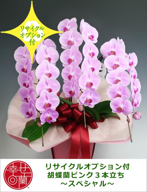 【リサイクルオプション付】胡蝶蘭ピンク3本立ち ~スペシャル~