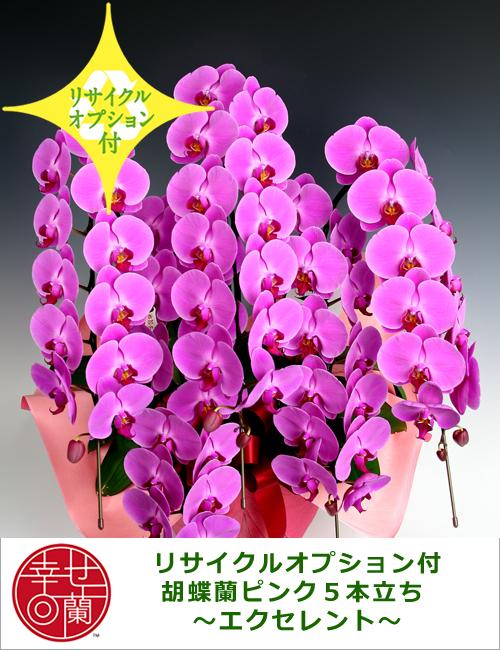 【リサイクルオプション付】胡蝶蘭ピンク5本立ち ~エクセレント~