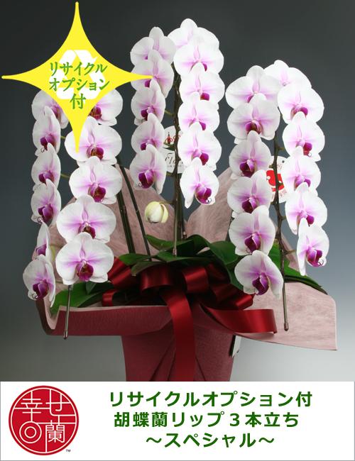 【リサイクルオプション付】胡蝶蘭リップ3本立ち ~スペシャル~