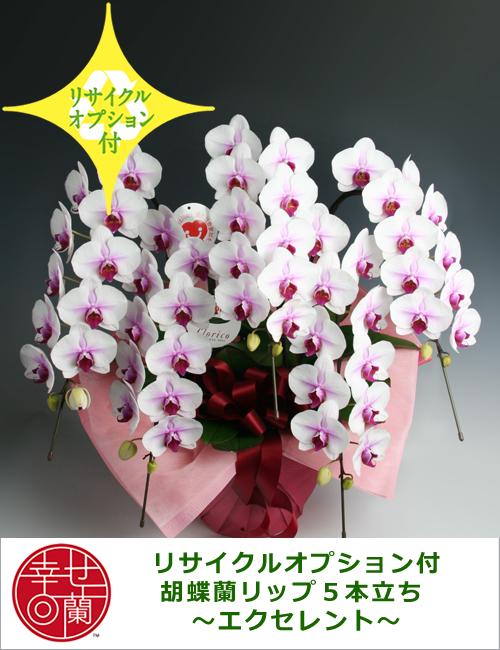 【リサイクルオプション付】胡蝶蘭リップ5本立ち ~エクセレント~