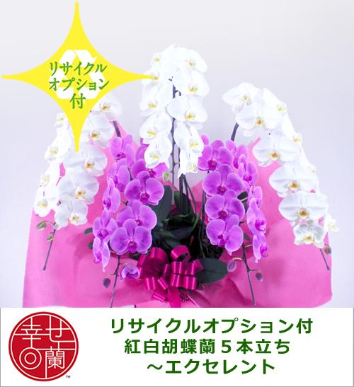 【リサイクルオプション付】紅白胡蝶蘭5本立ち ~エクセレント~