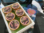 野菜の味が濃い!農家のプレミアムジェラートシリーズ「さつまいも」6個入り送料無料