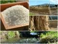 ヨシ子のはせがけ米(白米・5kg)