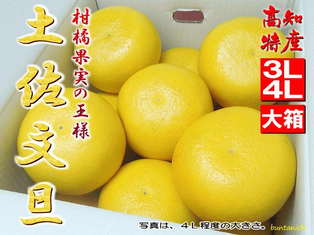 16土佐文旦4L10キロ