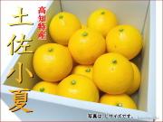 土佐小夏上級品3キロL