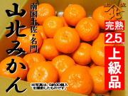 山北みかん640商品2.5