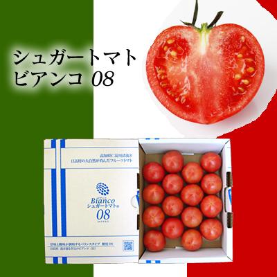 シュガートマト16玉入