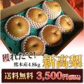 熊本県産 新高梨  6玉入り  4.8kg