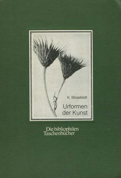 Karl Blossfeldt: Urformen der Kunst