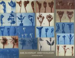 Karl Blossfeldt: ARBEITSCOLLAGEN