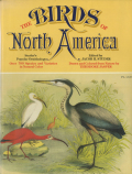 Studer's Popular Ornithology - The Birds of North America