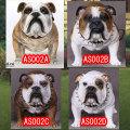 【DID】AS002 Animal series British Bulldog 1/6スケール 犬 ブリティッシュ・ブルドッグ
