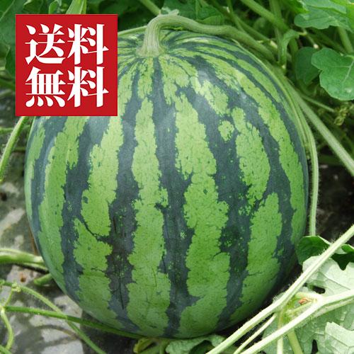 尾花沢スイカ[縞無双(または秀山)]2Lサイズ(1玉)