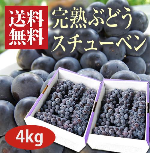 完熟ぶどうスチューベン4kg(12~14房程度)
