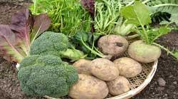 野菜セットイメージ写真