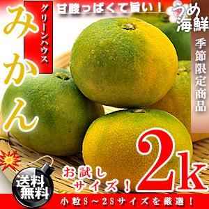 佐賀県産 グリーン ハウスみかん 2kg(小粒S〜2Sサイズ)【送料無料】みかん※代金引換不可【ギフト】