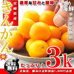 きんかん たっぷり!3kg(サイズ未選別)【送料無料】【金柑】