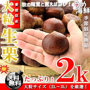 希少な大粒サイズ!愛媛県産 生栗 たっぷり 2k(2L〜3Lサイズ)【送料無料】【栗 】【くり】※代金引換不可