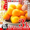 きんかん たっぷり!4kg(サイズ未選別)【送料無料】【金柑】