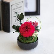 苔玉「八重薔薇」(紅赤)(1個/1ロット)