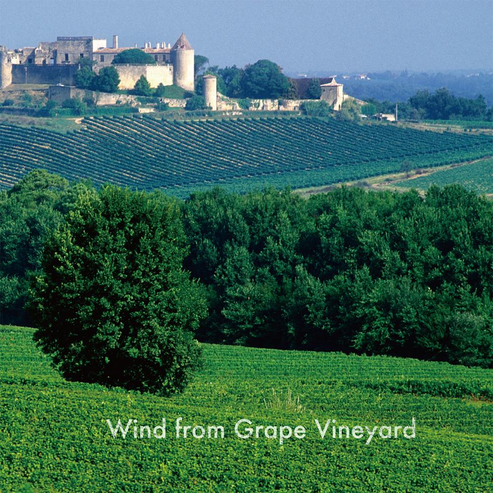 Wind from Grape Vineyard�������ƺ��